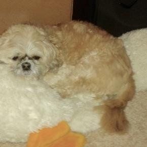 My Dog's DivertedLoyalty